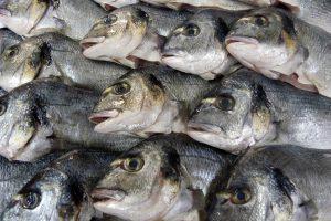 Pescados Arias Cal